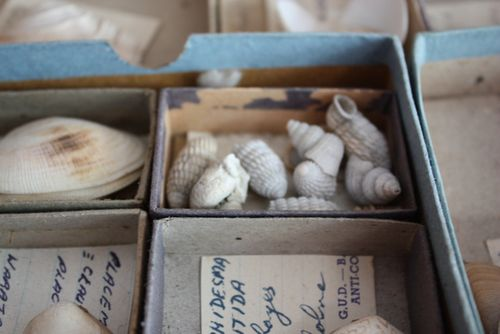 Vintage shell collection - 5
