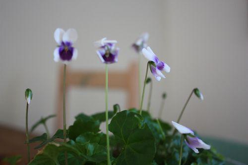 Violets & MoMA - 1