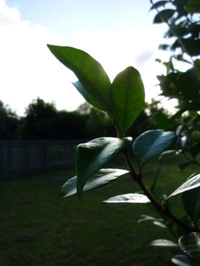 Summer green - 01