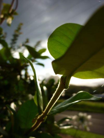 Summer green - 03