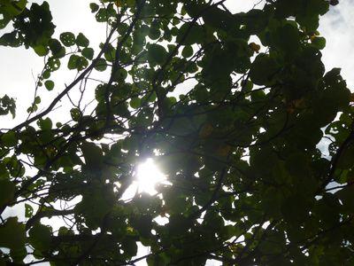 Summer green - 10