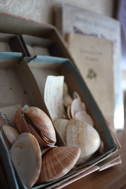 Vintage shell collection - 2