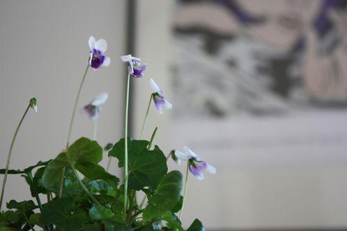 Violets & MoMA - 3