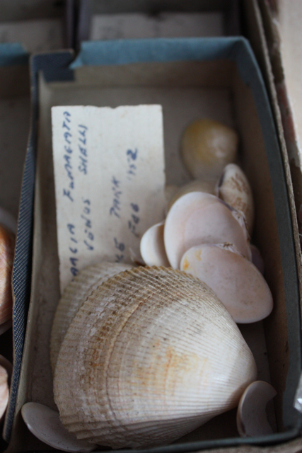 Vintage shell collection - 6