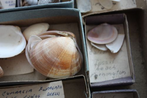 Vintage shell collection - 7