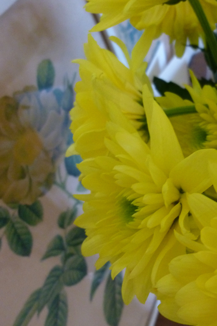 Yellow chrysanthemums - 2