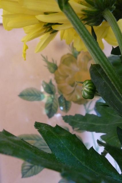 Yellow chrysanthemums - 3